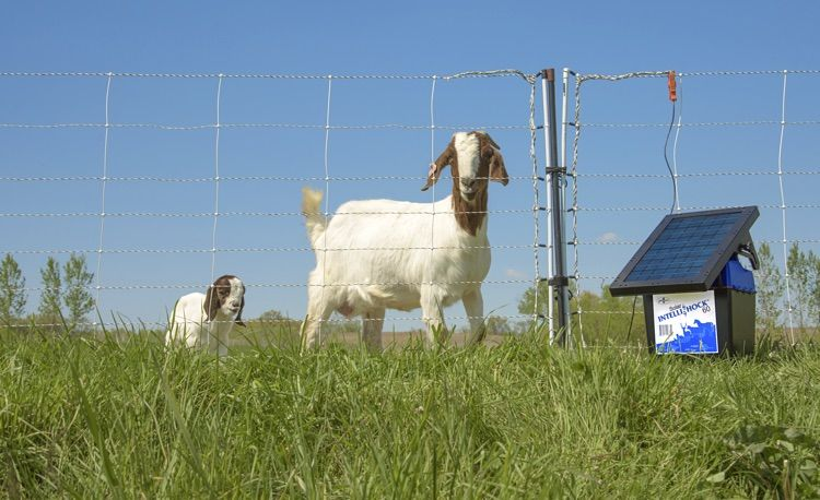 Solar Energizers for Electric Fence