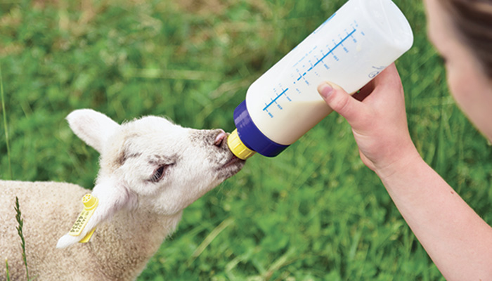 5Drink Bottle Nipple Teat Lamb Feed Kids Pets Pup Orphan Soft Ewe Goats SheepUQ