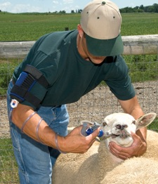 Drenching and Vaccinating Tools for Small Livestock
