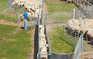 Sheep And Goat Equipment Premier1supplies