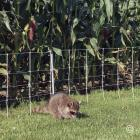 Electric fence - RaccoonNet® 4/18/12 Electric Netting