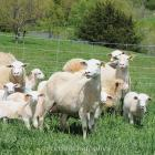 Electric Fence and Netting for Sheep - Premier1Supplies
