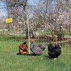 Electric fence - Chicken Net 12/48/3