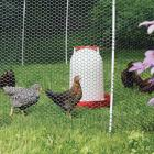 Electric fence - NoShock Chick Fence