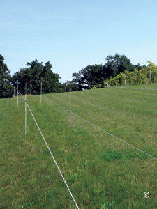 ELECTRIC FENCING TO CONTROL DEER AND ELK - EXTENSION