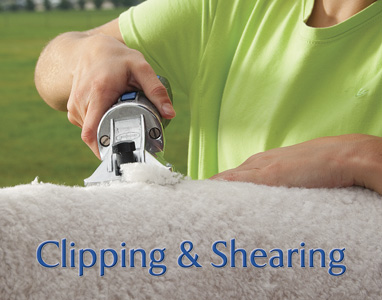 Clipping and Shearing