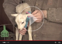 Ear tagging video button