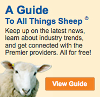 Guide to all things sheep