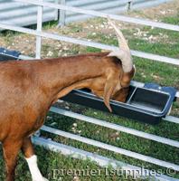 GoatTuff Feeder