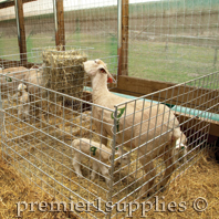 A typical lambing jug at Premier