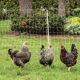 PoultryNet® Electric Fence