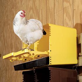 ChickBox
