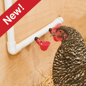 Poultry Drinking Cups