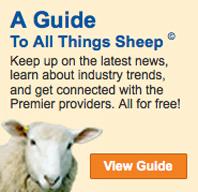 Sheep Guide