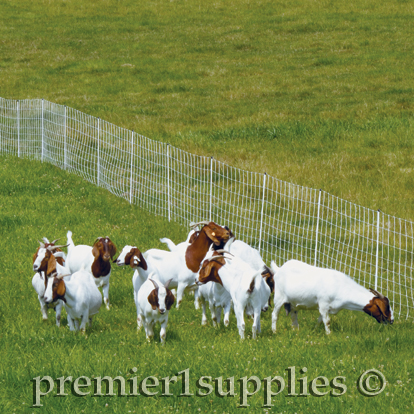 Premier1supplies Com Spring Grazing Tips From Premier