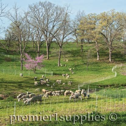Sheep Netting