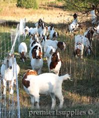 Fences for Goats