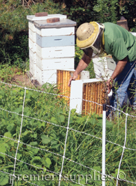 Beehive Protection