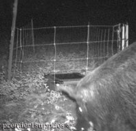 Photo taken with a trail camera