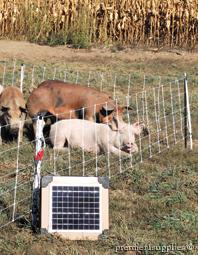 Swine Energizers