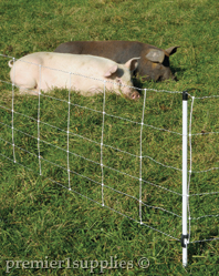 Pasture pigs fenced in by QuikFence