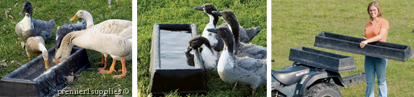 Ducks and Geese drinking out of troughs