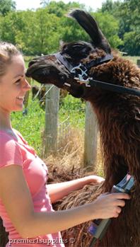 Trimming llama
