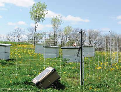 Protecting Bee Hives with fence