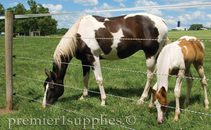 FARMGARD 48 IN. X 100 FT. HORSE FENCE WITH GALVANIZED