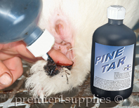 Applying pine tar to ears