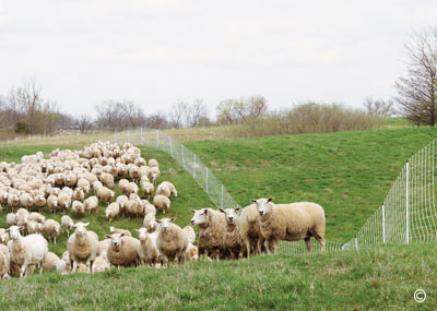Pasture Management-Is It Worth The Effort?