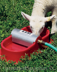 A lamb drinking from a Kane Waterer.