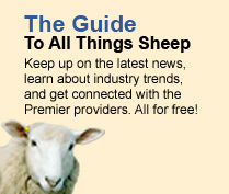 The guide to all things sheep