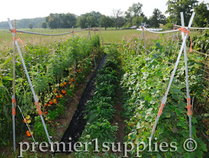 Premier's bountiful garden