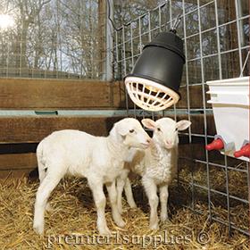Lambing Supplies