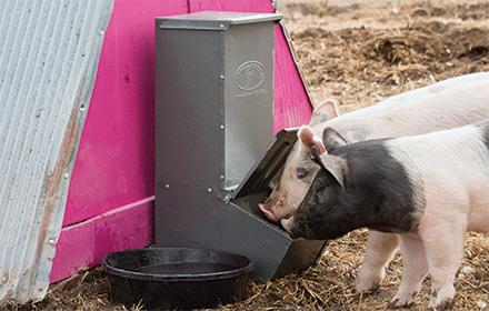 Single Door Hog Feeder