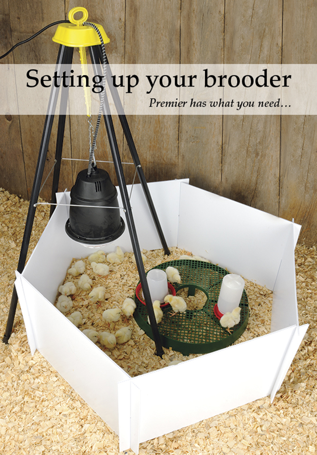 Setting up your Brooder