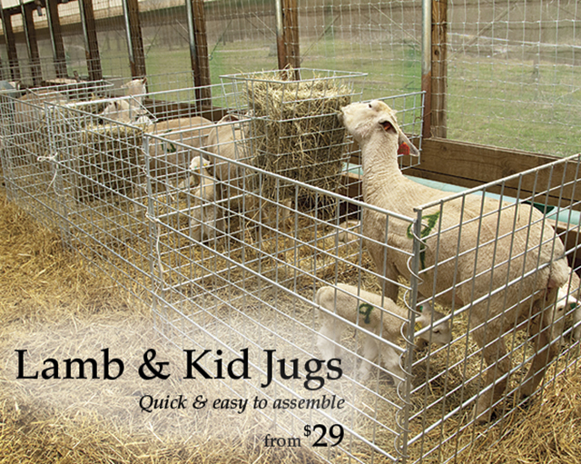 Lamb and Kid Jugs