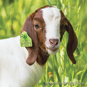 Ear Tags for Livestock