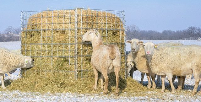 Big Round Hay Bale Feeders for Sheep