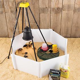 Heat Lamp Starter Kits