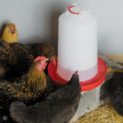 Heated Waterer