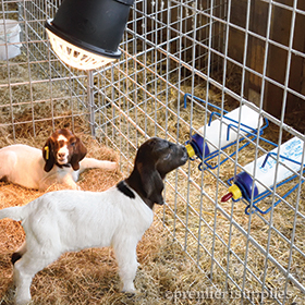 Lambing & Kidding Supplies