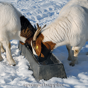 PortaTrough™ as a goat feeder