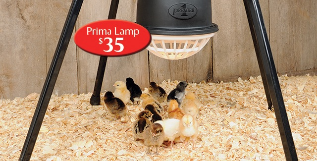 Safer Heat Lamp for Chicks