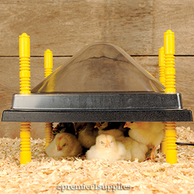 Heating Plates for Poultry