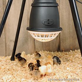 Prima Heat Lamp