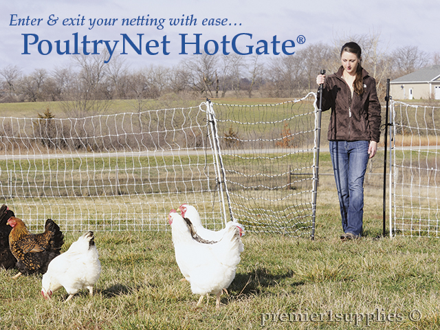 Using a Premier HotGate for fast, safe access to the poultry yard.