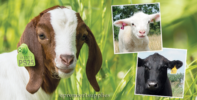 Ear Tags for Livestock and Animal Identification