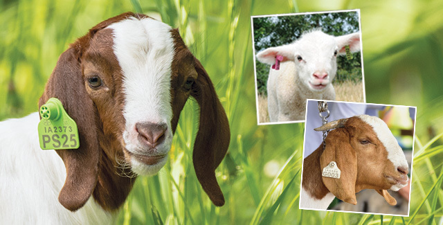 USDA Approved Ear Tags for Livestock and Animal Identification